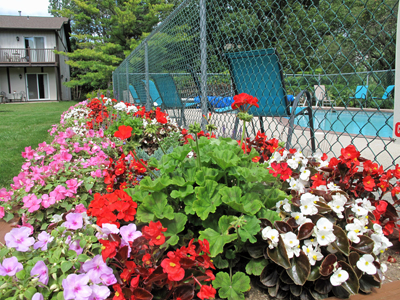 Sister Bay Inn flowers near pool