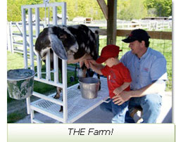 goat-milking-at-the-farm