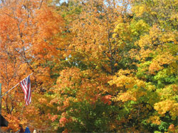 Big-fall-trees-with-flag